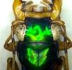 Mühen eines Insektenlebens; Bild 5