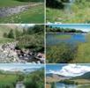 Schwimmkäfer aus der Mongolei; Bild 0