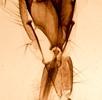 Mundwerkzeuge der Insekten; Bild 5