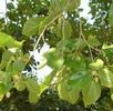 Der Seidenspinner; Bild 1