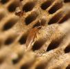 Der Kleinste Käfer; Bild 3