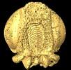 Die fossile Wespe; Bild 1