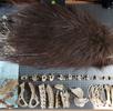 Digitalisierung der Säugetiersammlung; Bild 1