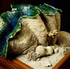 Riesenmuscheln; Bild 0