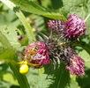 Mühen eines Insektenlebens; Bild 3