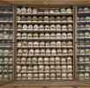 Die osteologische Sammlung; Bild 0