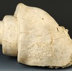 Steinkern einer Leviathan-Schnecke; Bild 0