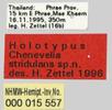 Etiketten auf Museumsobjekten; Bild 0