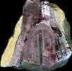 Fossile Stachelhäuter; Bild 0