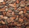 Der Kakaobaum; Bild 0