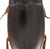 Evolution einer hyperdiversen Insektengruppe; Bild 1