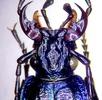 Mundwerkzeuge der Insekten; Bild 0