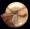 Ammonit mit abgeschliffener Schale; Bild 4