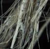 Faseranalyse an Textil aus dem Salzbergwerk Hallstatt; Bild 3