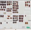 Die Hemiptera-Sammlung; Bild 2