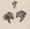 Totentrompete; Bild 0