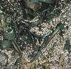 Grünverfärbung eines bronzezeitlichen Schädels; Bild 1