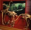 Pleistozän; Bild 0