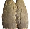 Fossile Reptilien; Bild 0