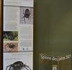 Europäische Spinne des Jahres; Bild 5