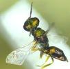 Mühen eines Insektenlebens; Bild 6