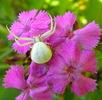 In den Blüten lauert der Tod; Bild 1