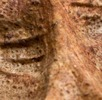 Venus von Willendorf; Bild 3