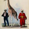 Die Giraffe; Bild 0