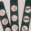 Die kaiserlichen Mikroskopischen Präparate; Bild 1