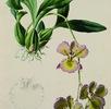 Blumen für einen Kaiser; Bild 0