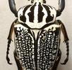 Anatomie des Insektenbeines; Bild 0