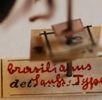 Novara Sammlung Hymenoptera; Bild 1