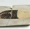 Fossile Gliedertiere; Bild 0
