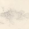 N° 234 Pazifischer Rotfeuerfisch; Bild 0