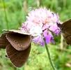 In den Blüten lauert der Tod; Bild 0