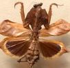 Die Natur macht den Insekten Beine; Bild 1
