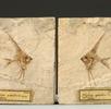 Fossile Fische; Bild 0