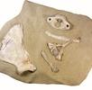 Die Mammutjägerstation Ruppersthal; Bild 3