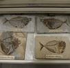 Erfassung der Museumsbestände; Bild 2