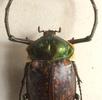 Die Natur macht den Insekten Beine; Bild 3