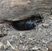 Mühen eines Insektenlebens; Bild 2