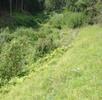 Rotflüglige Schnarrschrecke; Bild 1