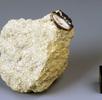 Marsmeteorit Chassigny; Bild 4