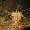 Exoten der Unterwelt; Bild 3