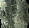 Die geologisch-paläontologische Abteilung; Bild 0