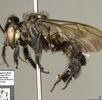 Stachellose Biene; Bild 0