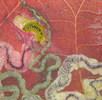 Blattminierende Raupen; Bild 2