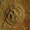 Ein Fossil namens Drei-Ärmchen; Bild 4