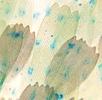 Die Flügelschuppen der Schmetterlinge; Bild 3