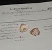Die Venusmuschel und die Kaiserin; Bild 0
